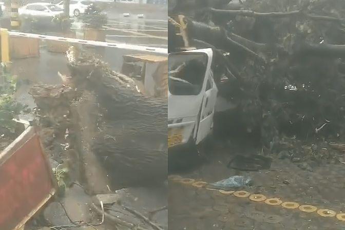 """实拍台风""""烟花""""影响下的青岛:大树被狂风连根拔起,多车被砸"""
