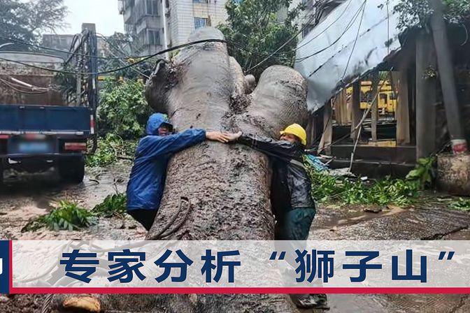 """台风""""狮子山""""登陆海南,大量轿车底盘被淹,粗壮大树直接被掀翻"""