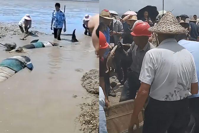 12头疑似鲸豚搁浅浙江海域