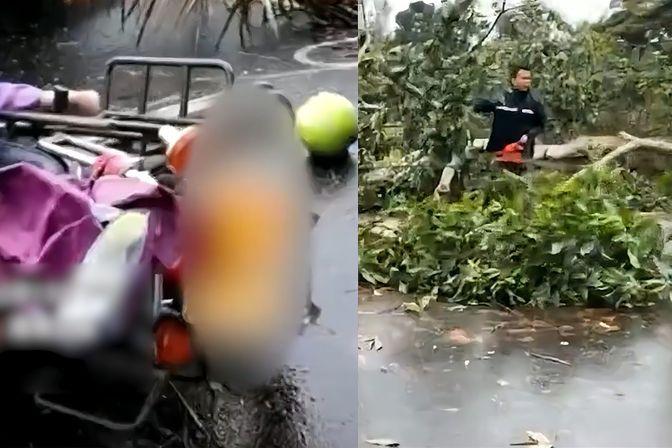 """台风""""圆规""""袭击海南 狂风刮倒大树砸中路人 2人不幸身亡"""