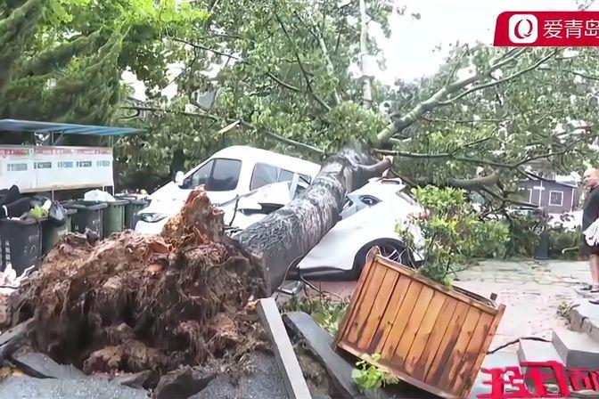 """台风""""烟花""""来袭!青岛路边大树倒塌,九辆私家车被砸!"""