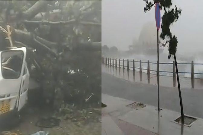山东青岛疑似受台风影响,树连根拔起砸到多车,网友直呼太揪心!