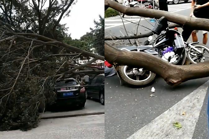 """台风""""圆规""""升级!泉州一男子被风刮倒的大树砸伤"""