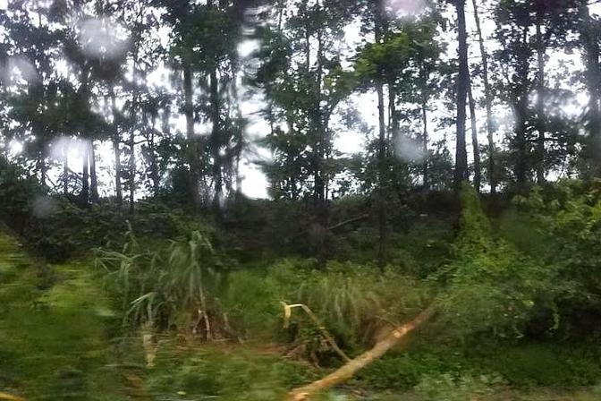 """台风""""山神""""袭击海南,刮倒树木砸坏汽车,消防队员现场帮忙"""