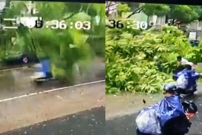 台风天男子骑车被大树砸中,瞬间被树枝埋压,随后一幕太暖心