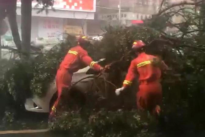"""台风""""海高斯""""到达江门:大树砸压车辆,铁皮坠落"""