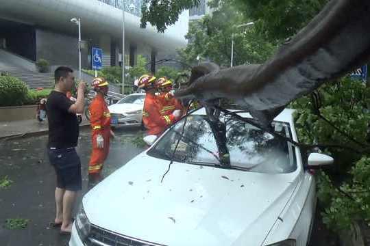 江苏多地遭台风肆虐:大树折断砸损小车,大妈雨中盲骑