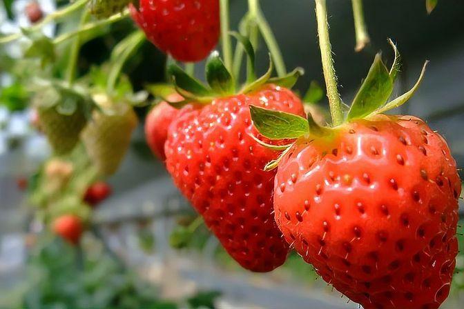 冬季多给孩子吃这3种水果,富含维生素,有助肠胃消化,增强免疫
