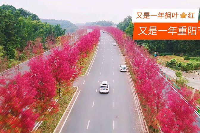 床车自驾游,重阳节长沙周边旅游网红打卡地之一一鱼形湖枫叶大道