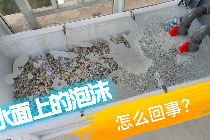 鱼缸水面的泡沫是怎么回事?要重视起来,你不能太大意