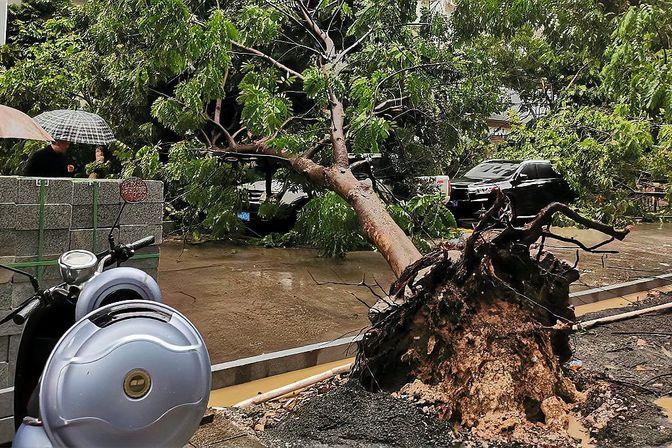 """受16号台风""""浪卡""""影响,湛江路边的车都被倒下的树木砸了"""