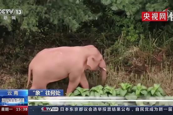 象群围成圈给小象取暖