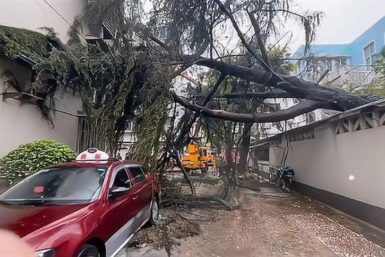 上海杨浦一大树被台风吹倒压坏高压电线,影响近千户居民供电