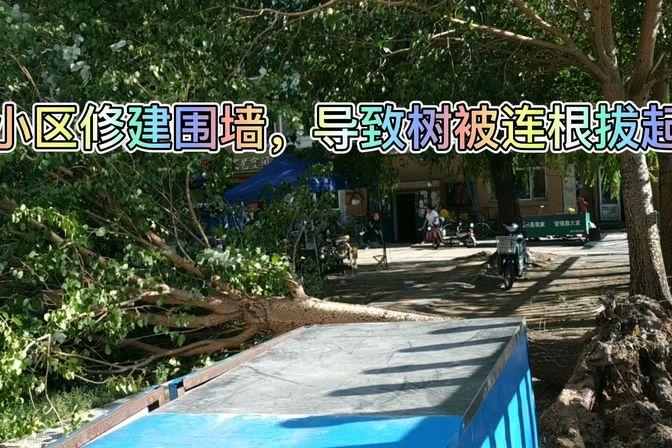 台风过后,小区树被连根拔起,砸到车和人谁负责任?